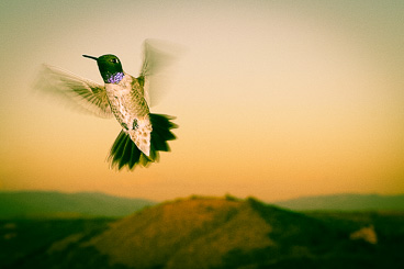 Google's hummingbird update has profound implication for web content
